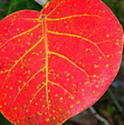Red Leaf With Yellow Veins Poster