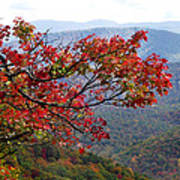 Red Leaves In The Blueridge Poster