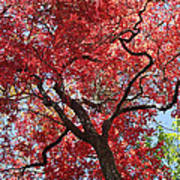 Red Leaves On Tree Poster