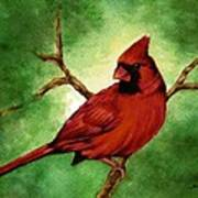 Red Male Cardinal Poster