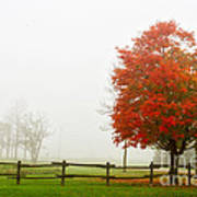Red Maple Tree And A Split-rail Fence Poster