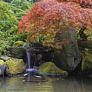 Red Maple Tree Over Waterfall Pond Poster
