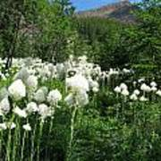 Red Mountain Beargrass Poster