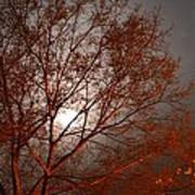 Red Oak At Sunrise Poster