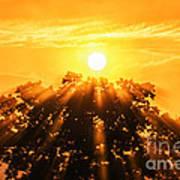 Red Oak Sunrise Fog Poster