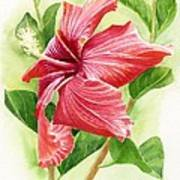 Red Orange Hibiscus Poster