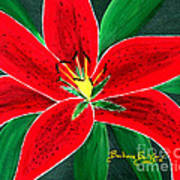 Red Oriental Daylily Poster