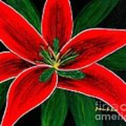 Red Oriental Lily Poster