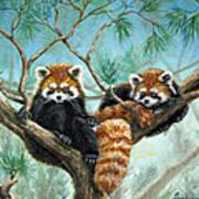 Red Pandas Poster