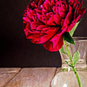 Red Peony Flower Vase Poster