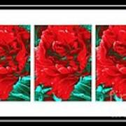 Red Peony Triptych Poster