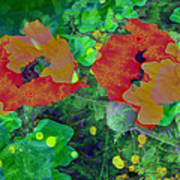 Red Poppies Flowers Poster