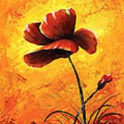 Red Poppy 012 Poster