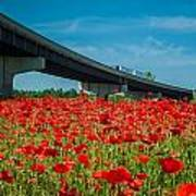 Red Poppy Field Near Highway Road Poster