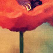 Red Poppy Poster by Rosie Nixon