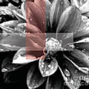 Red Rain Blossom Poster