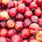 Red Ripe Plums Poster