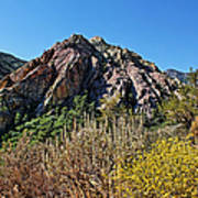 Red Rock Canyon With Foliage Poster