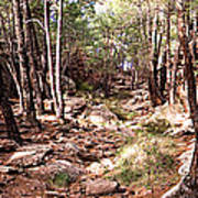 Red Rock Pine Forest Poster