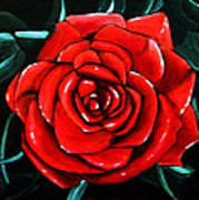 Red Rose In Black And White Poster