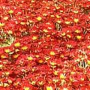 Red Sea of flowers Poster
