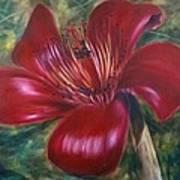 Red Silk Cotten Bombex Poster