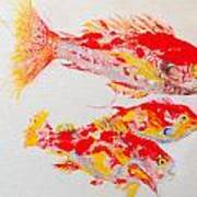 Red Snapper Family Painted Poster