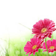 Red Spring Flowers Poster
