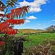 Red Sumac Field Poster
