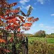 Red Sumac Tree Poster