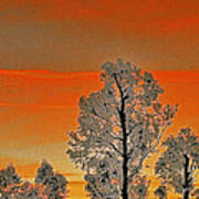 Red Sunset With Trees Poster