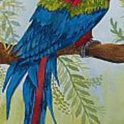 Red Tail Macaw Too Poster