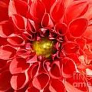Red Tubular Flower Poster