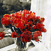 Red Tulips In Window Poster