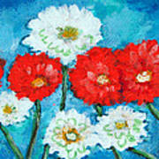 Red White And Blue Zinnia Flowers Poster