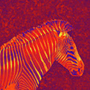 Red Zebra Poster