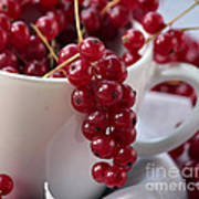 Redcurrant Close Up Poster