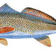 Redfish Poster