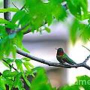 Redneck Humming Bird Poster