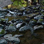 Redwood Creek Poster