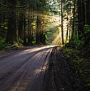 Redwood Magic Poster