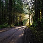 Redwood National Park Morning Poster