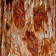 Redwood Spirit Poster