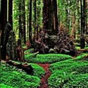 Redwoods Wonderland Poster by Benjamin Yeager