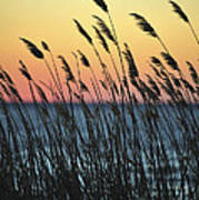 Reeds At Sunset Island Beach State Park Nj Poster