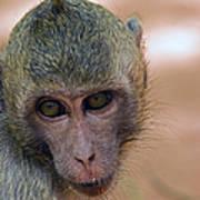 Reese's Monkey Portrait Poster