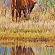 Reflecting Foal Poster