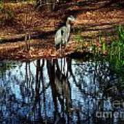 Reflections Of A Heron Poster