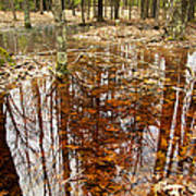 Reflections On A Forest Floor Poster