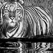 Reflective Tiger Poster